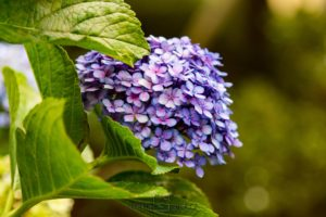 Madeira - ostrov květin