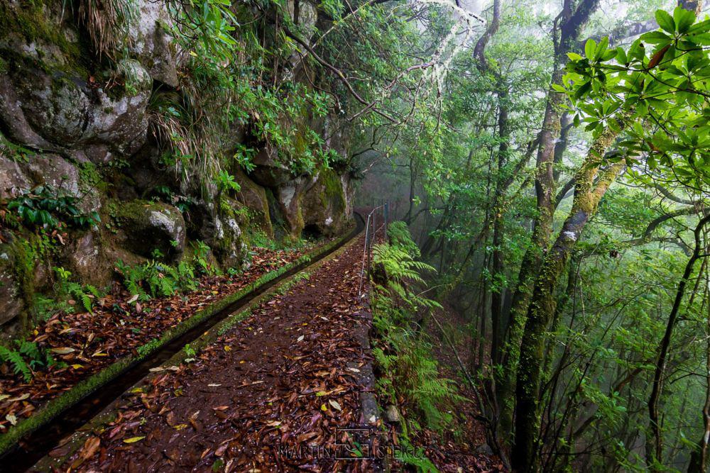Cesta pralesem s vavříny - Leváda dos Cedros
