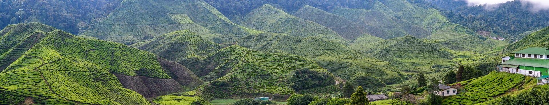 Panorama údolí Cameron Highlands - Malajsie cestopis, Martin Šístek
